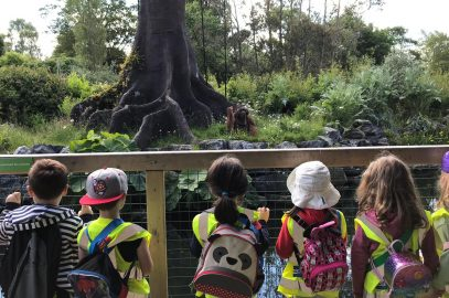 Junior Infants Trip to the Zoo